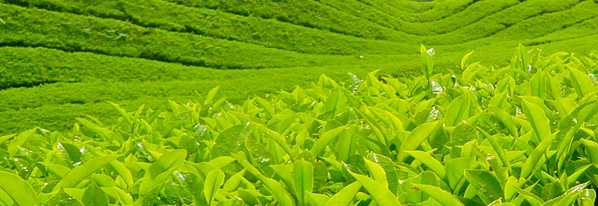 Dhanuka Sarthi Crop Detail banner section 1 image