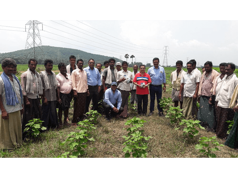 2018-Sakura (Cotton) Field day activity