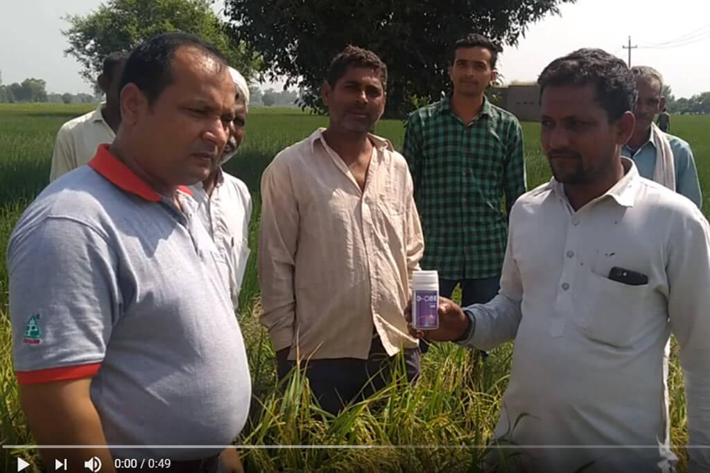 D-ONE Insecticide in Paddy for BPH - Farmer Testimonial