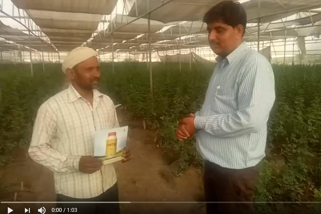 Foster Miticide for mites control in Rose - Farmer Testimonial