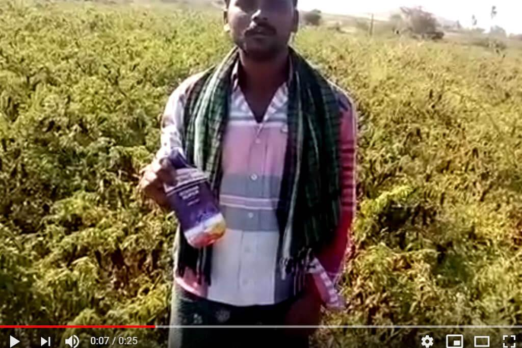 Godiwa Super Fungicide - Farmer Testimonial on Chilli Vishnu vardhan Reddy